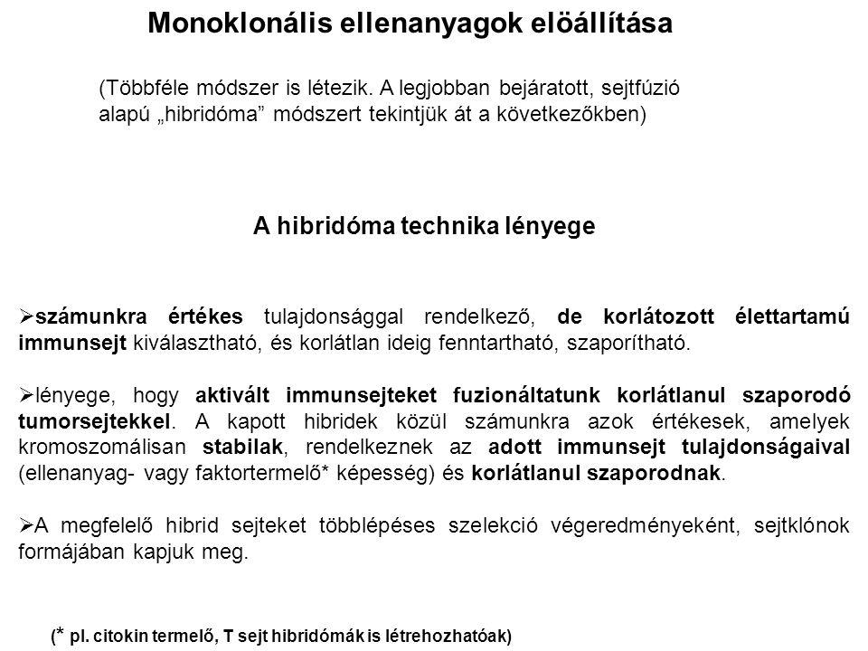 Monoklonális ellenanyagok elöállítása A hibridóma technika lényege