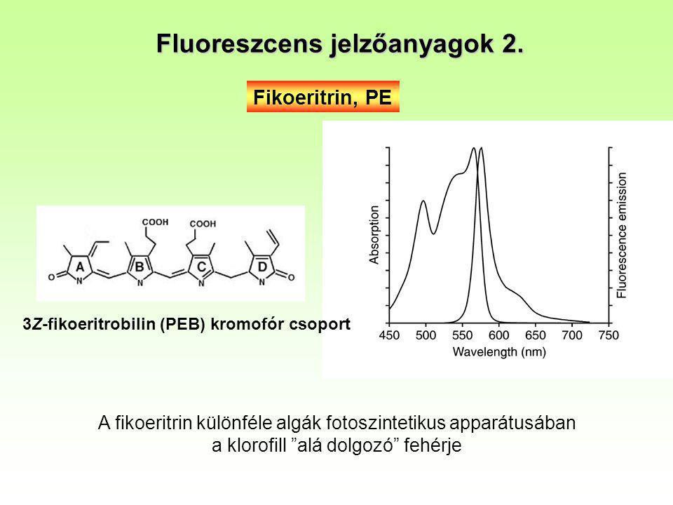 Fluoreszcens jelzőanyagok 2.