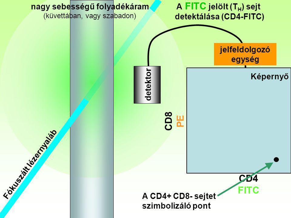 nagy sebességű folyadékáram detektálása (CD4-FITC)
