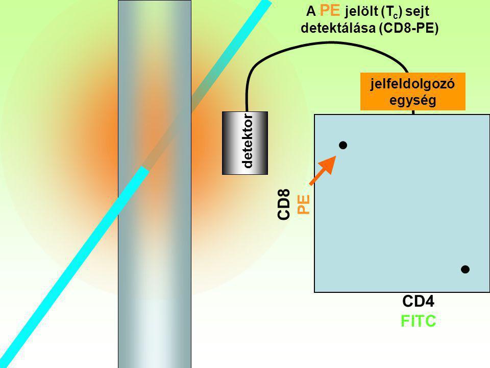 CD8 PE CD4 FITC Tc A PE jelölt (Tc) sejt detektálása (CD8-PE)