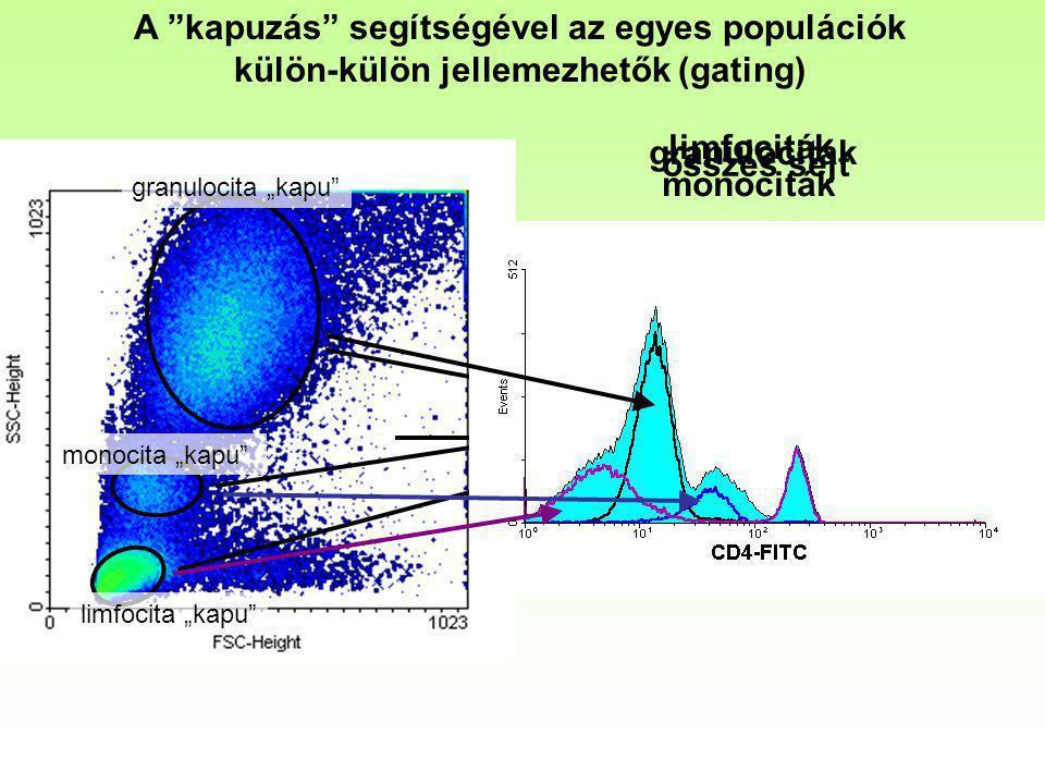 A kapuzás segítségével az egyes populációk külön-külön jellemezhetők (gating)