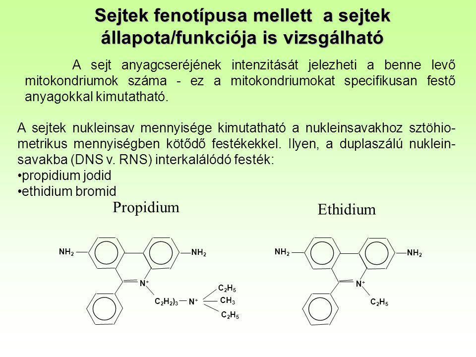 Sejtek fenotípusa mellett a sejtek állapota/funkciója is vizsgálható