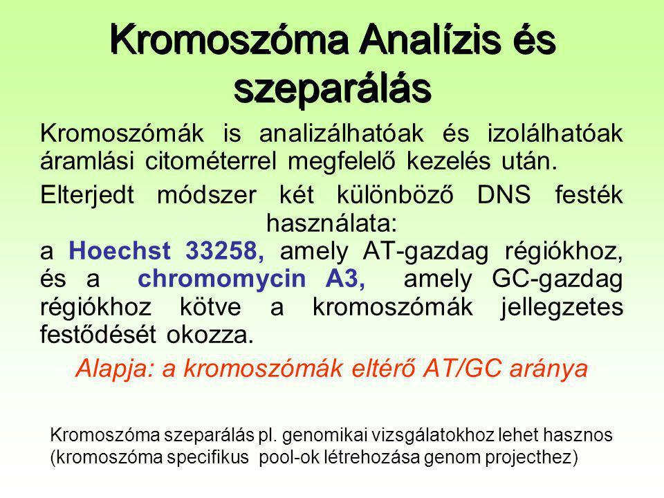 Kromoszóma Analízis és szeparálás