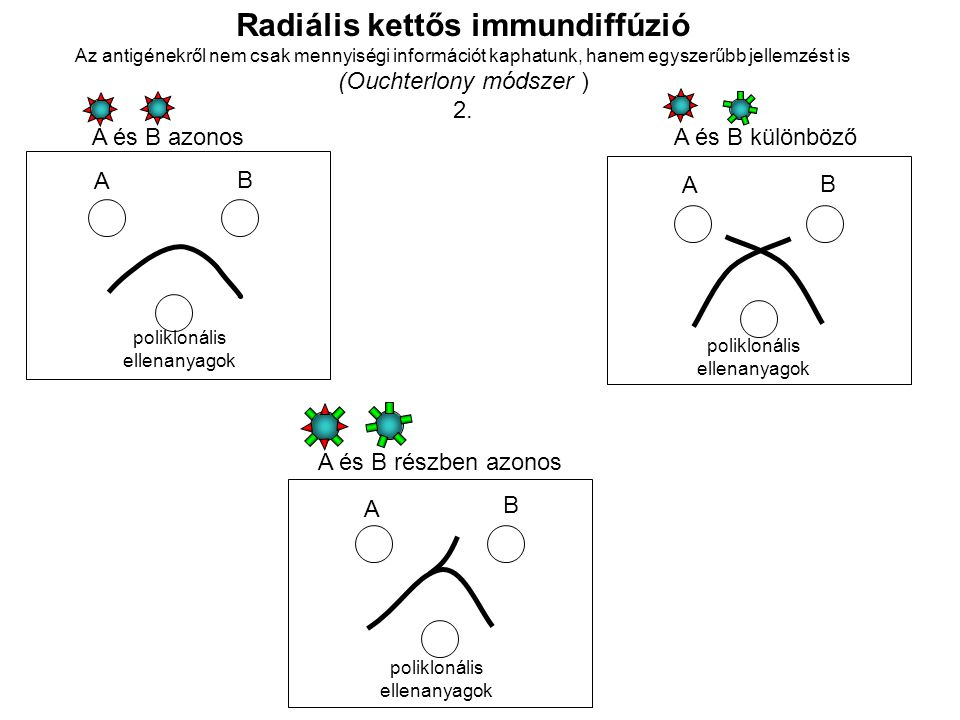 Radiális kettős immundiffúzió