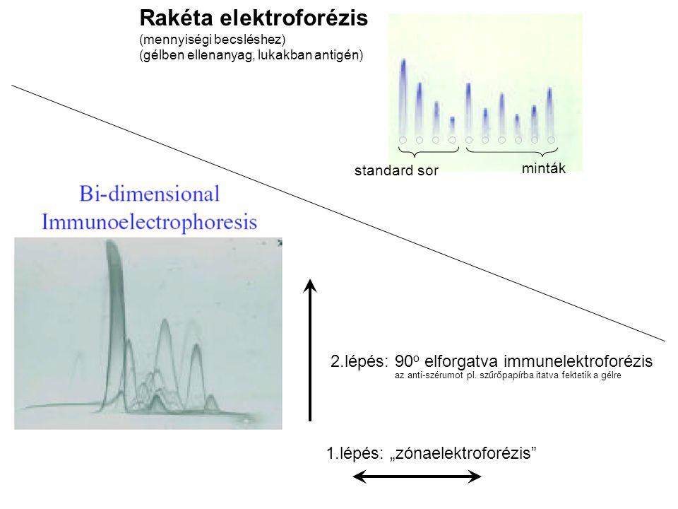 Rakéta elektroforézis