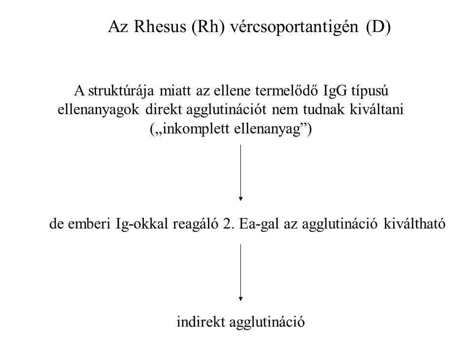 Az Rhesus (Rh) vércsoportantigén (D)