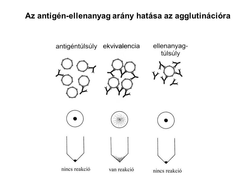 Az antigén-ellenanyag arány hatása az agglutinációra