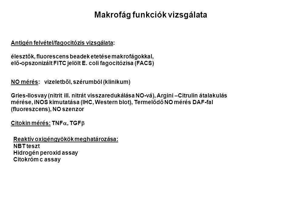Makrofág funkciók vizsgálata