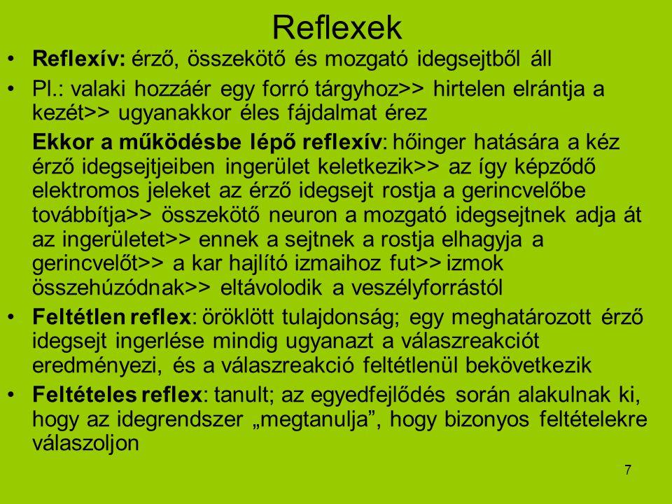 Reflexek Reflexív: érző, összekötő és mozgató idegsejtből áll