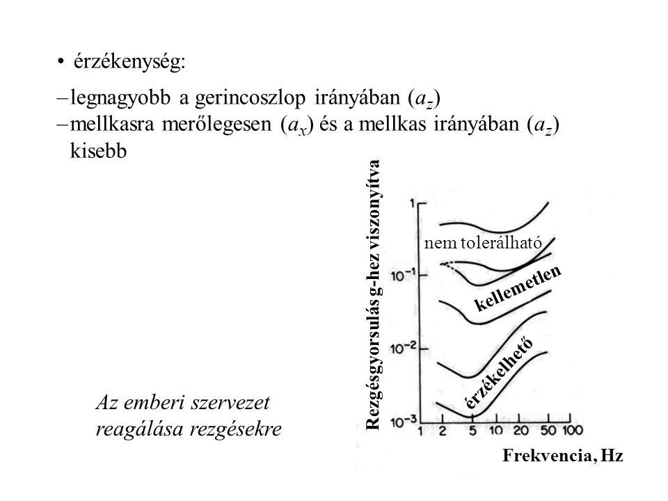legnagyobb a gerincoszlop irányában (az)