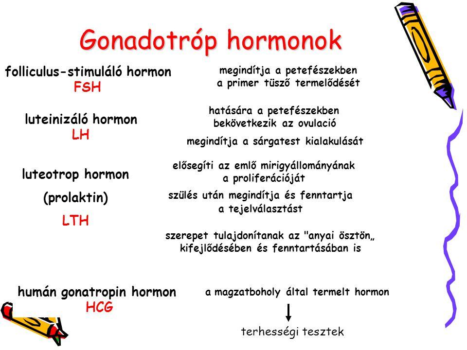 Gonadotróp hormonok folliculus-stimuláló hormon FSH luteinizáló hormon