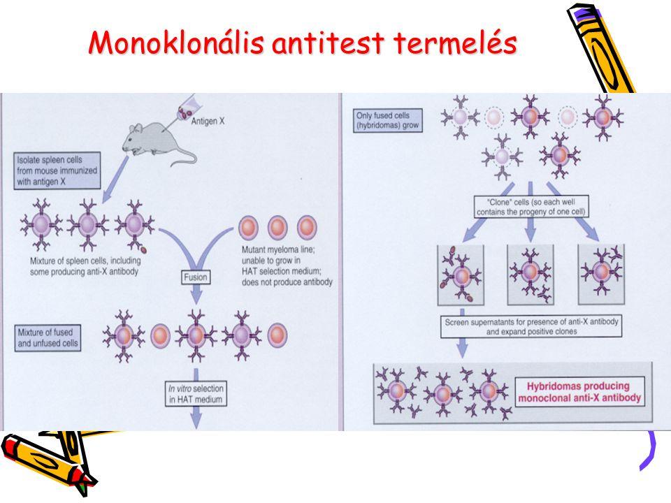 Monoklonális antitest termelés