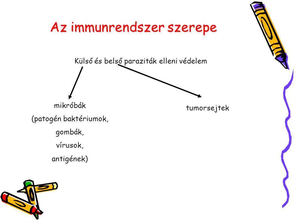 Az immunrendszer szerepe