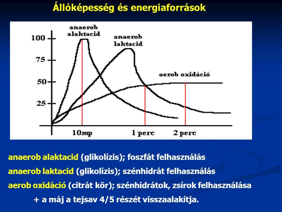 Állóképesség és energiaforrások