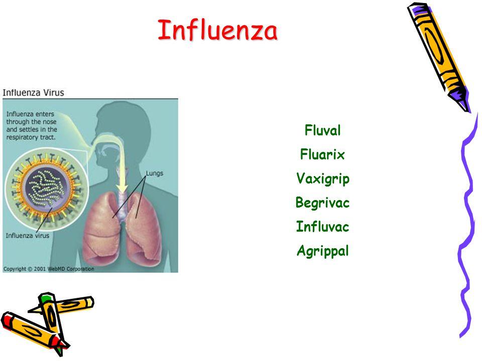 Influenza Fluval Fluarix Vaxigrip Begrivac Influvac Agrippal