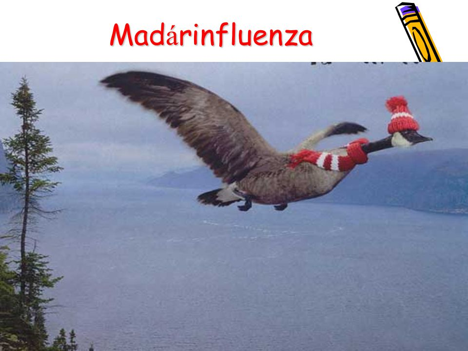 Madárinfluenza 37