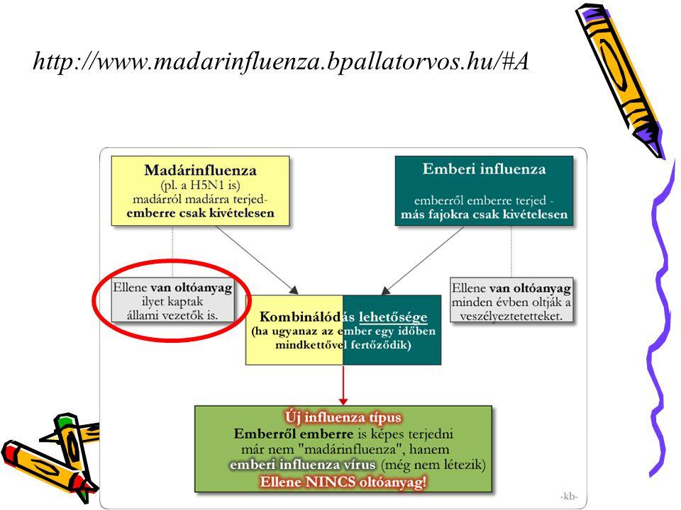 http://www.madarinfluenza.bpallatorvos.hu/#A 41