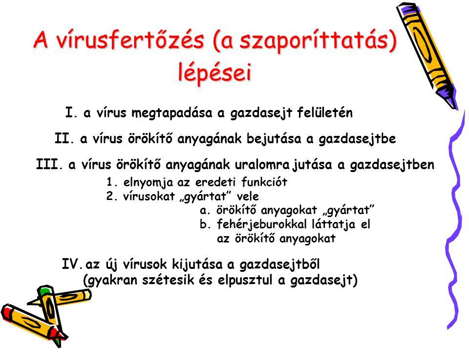 A vírusfertőzés (a szaporíttatás) lépései
