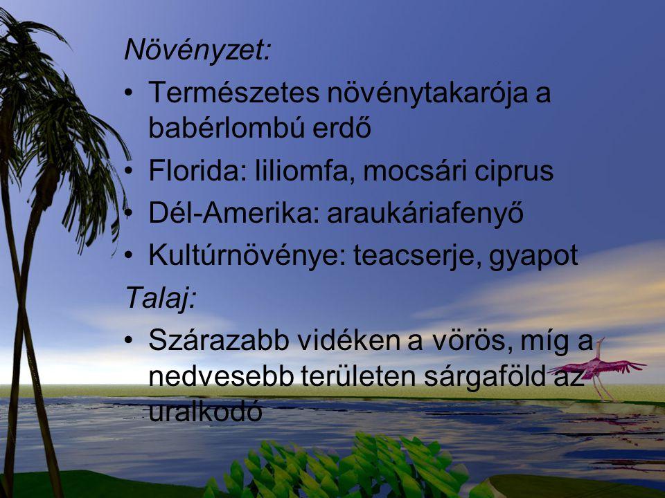 Növényzet: Természetes növénytakarója a babérlombú erdő. Florida: liliomfa, mocsári ciprus. Dél-Amerika: araukáriafenyő.