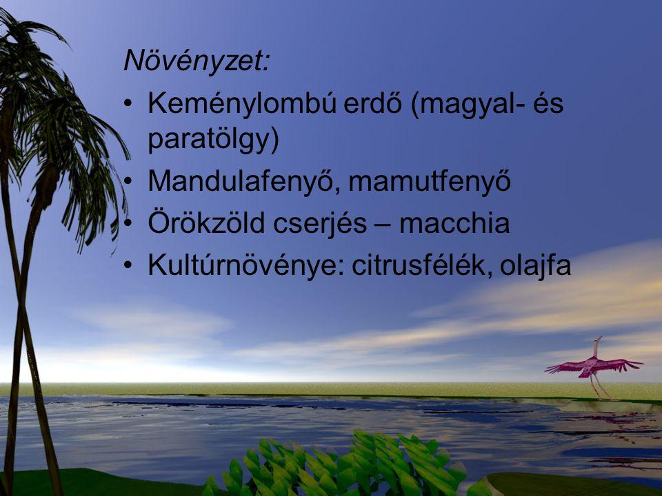 Növényzet: Keménylombú erdő (magyal- és paratölgy) Mandulafenyő, mamutfenyő. Örökzöld cserjés – macchia.