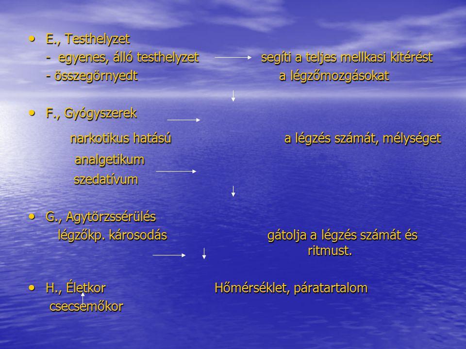 E., Testhelyzet - egyenes, álló testhelyzet segíti a teljes mellkasi kitérést. - összegörnyedt a légzőmozgásokat.