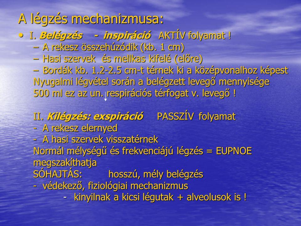 A légzés mechanizmusa: