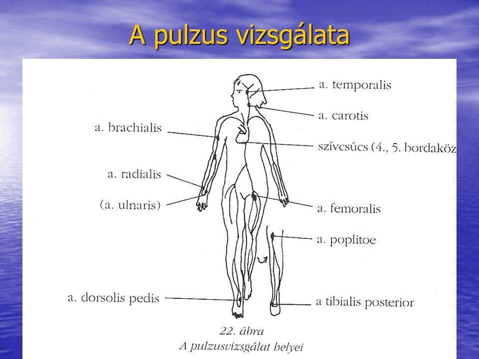 A pulzus vizsgálata