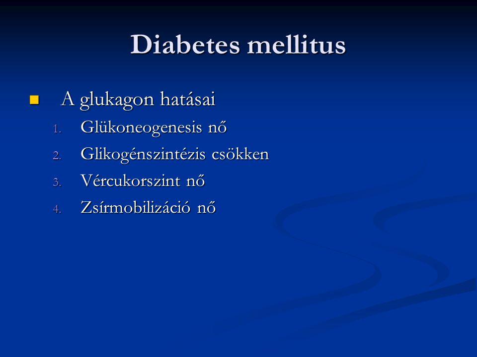 Diabetes mellitus A glukagon hatásai Glükoneogenesis nő
