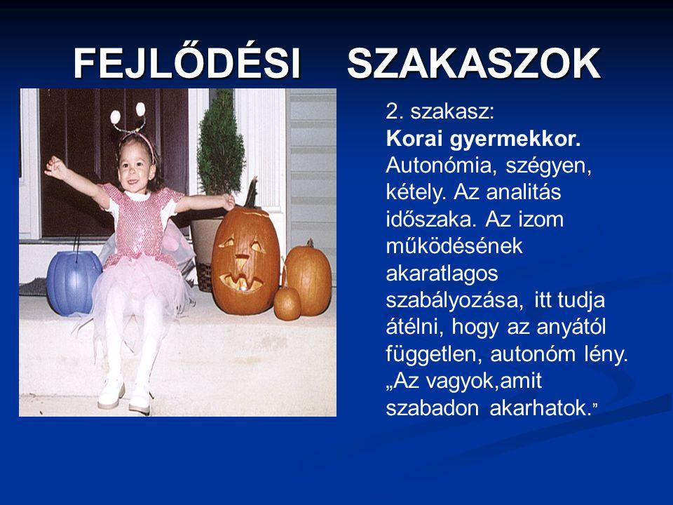 FEJLŐDÉSI SZAKASZOK 2. szakasz: Korai gyermekkor.