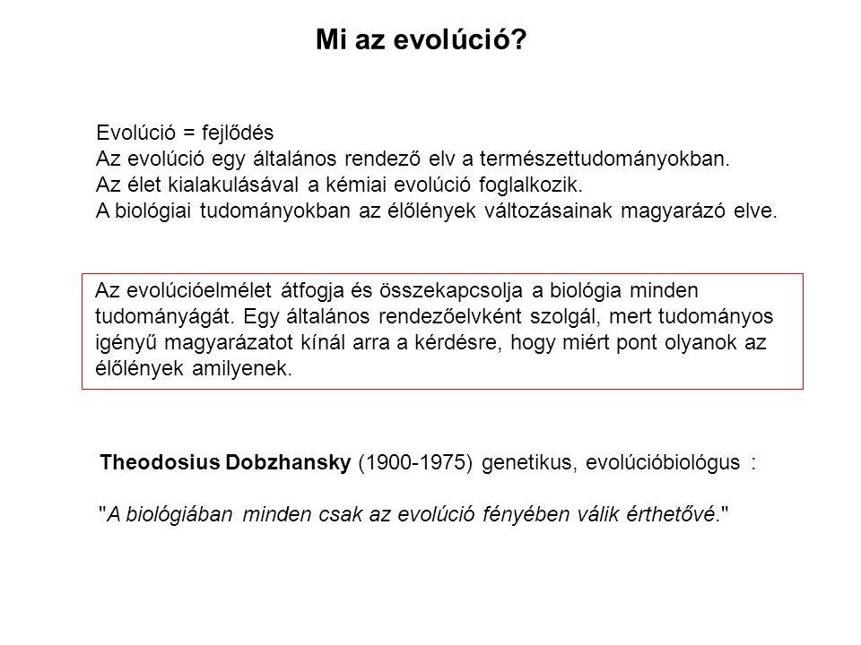 Mi az evolúció Evolúció = fejlődés