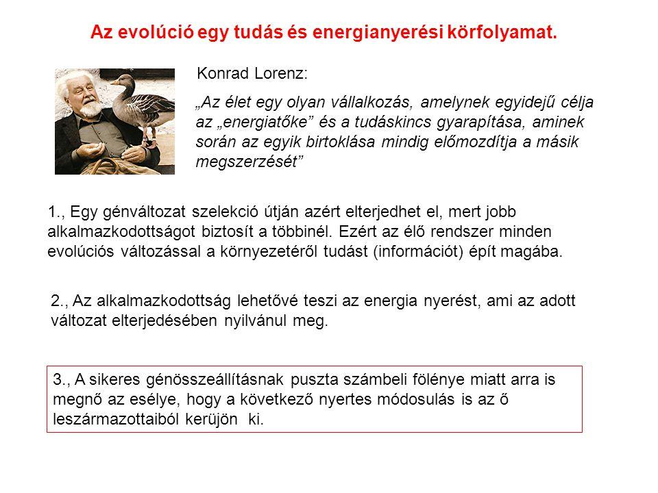 Az evolúció egy tudás és energianyerési körfolyamat.