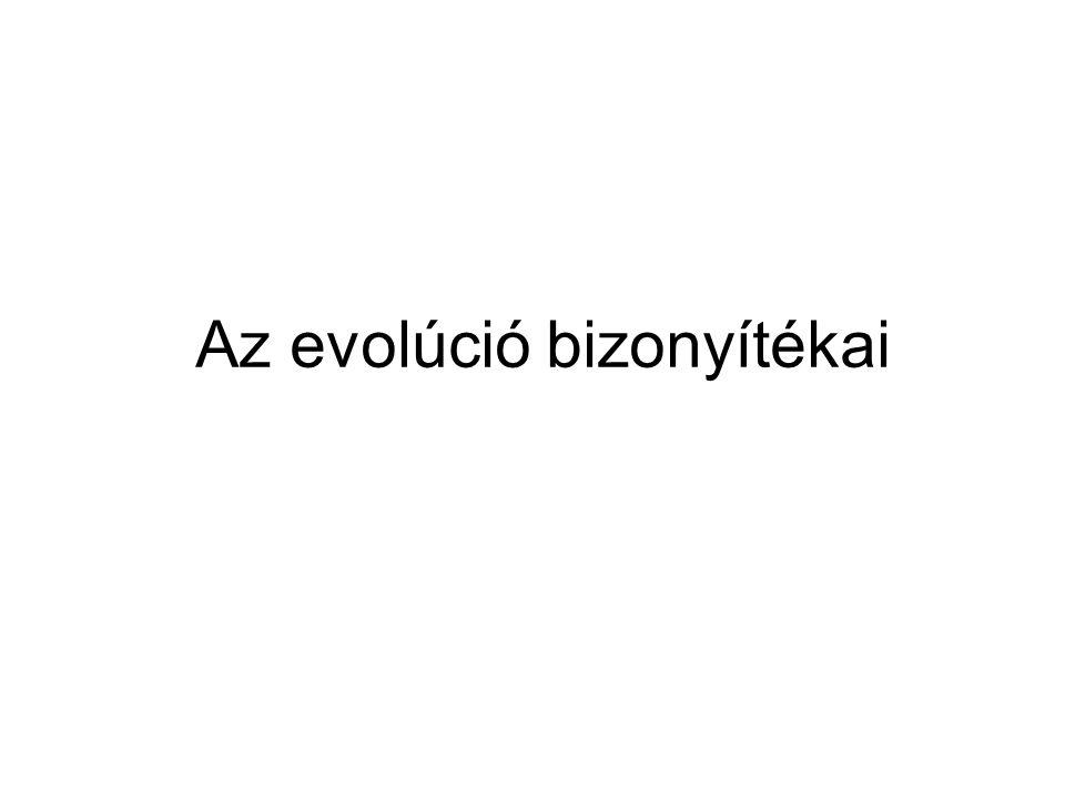 Az evolúció bizonyítékai