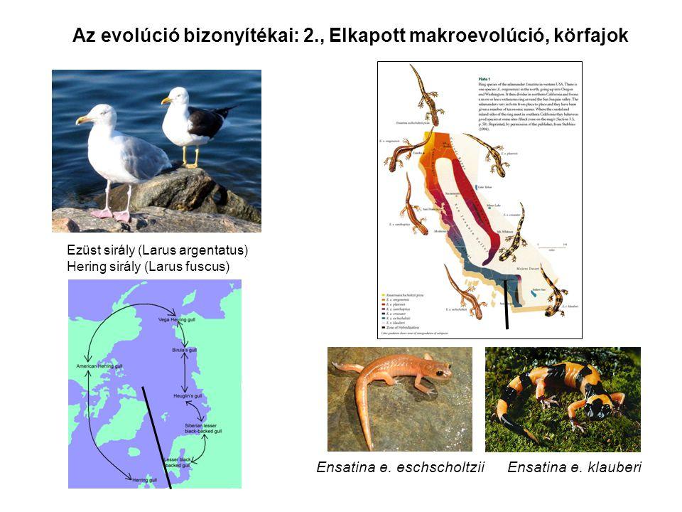 Az evolúció bizonyítékai: 2., Elkapott makroevolúció, körfajok