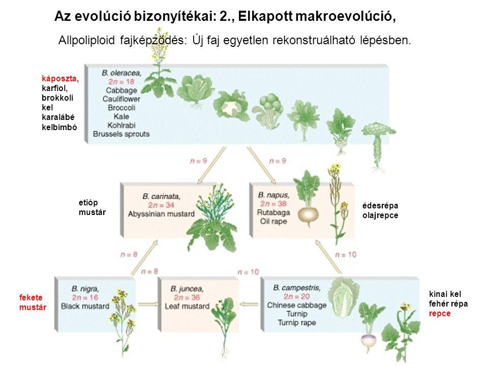 Az evolúció bizonyítékai: 2., Elkapott makroevolúció,