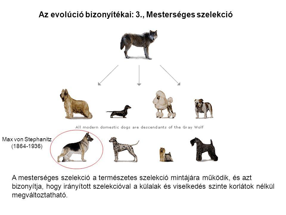 Az evolúció bizonyítékai: 3., Mesterséges szelekció