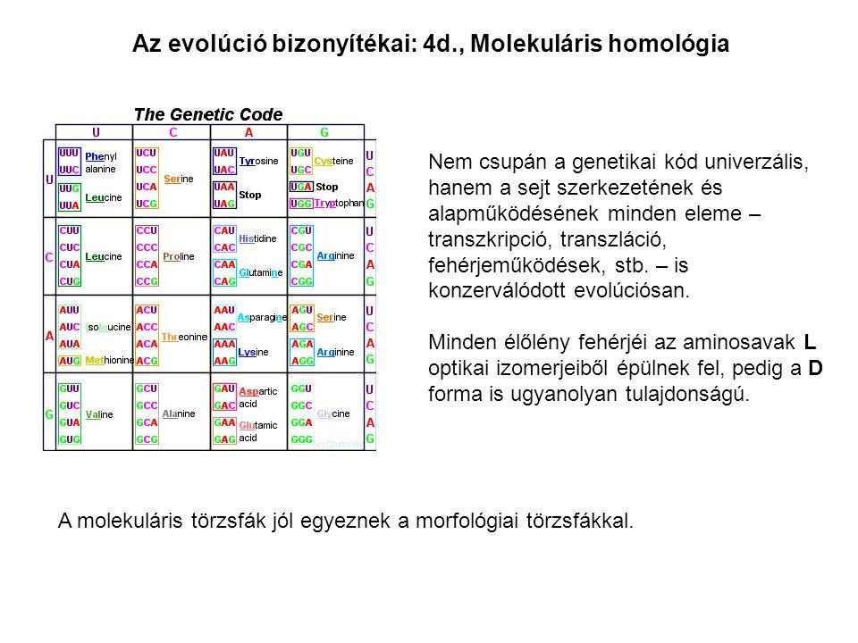 Az evolúció bizonyítékai: 4d., Molekuláris homológia