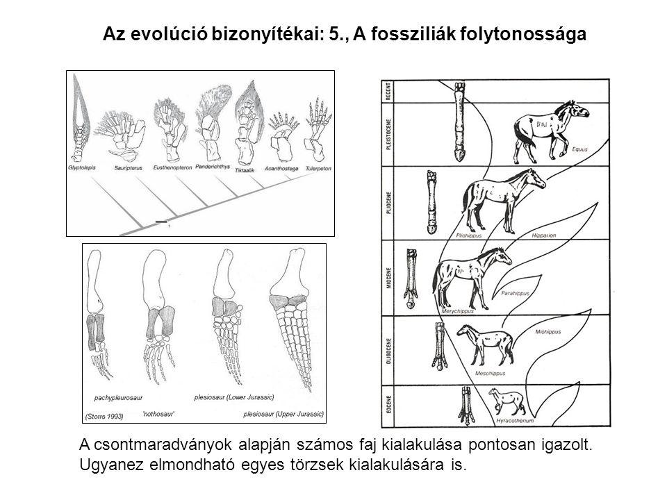 Az evolúció bizonyítékai: 5., A fossziliák folytonossága