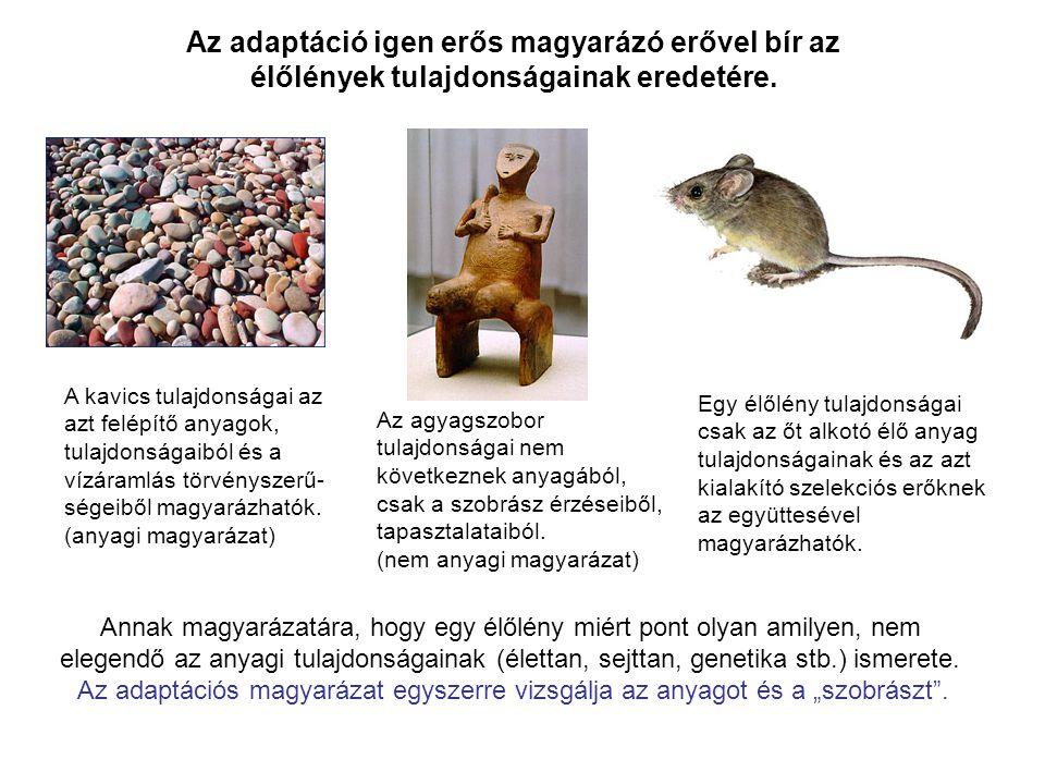 Az adaptáció igen erős magyarázó erővel bír az élőlények tulajdonságainak eredetére.