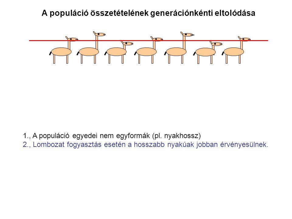 A populáció összetételének generációnkénti eltolódása