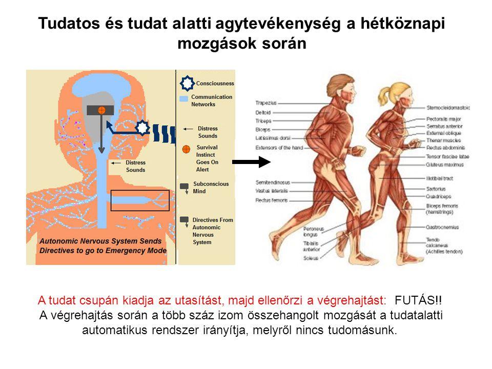 Tudatos és tudat alatti agytevékenység a hétköznapi mozgások során