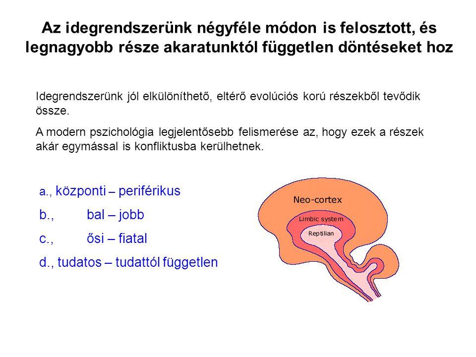 Az idegrendszerünk négyféle módon is felosztott, és legnagyobb része akaratunktól független döntéseket hoz