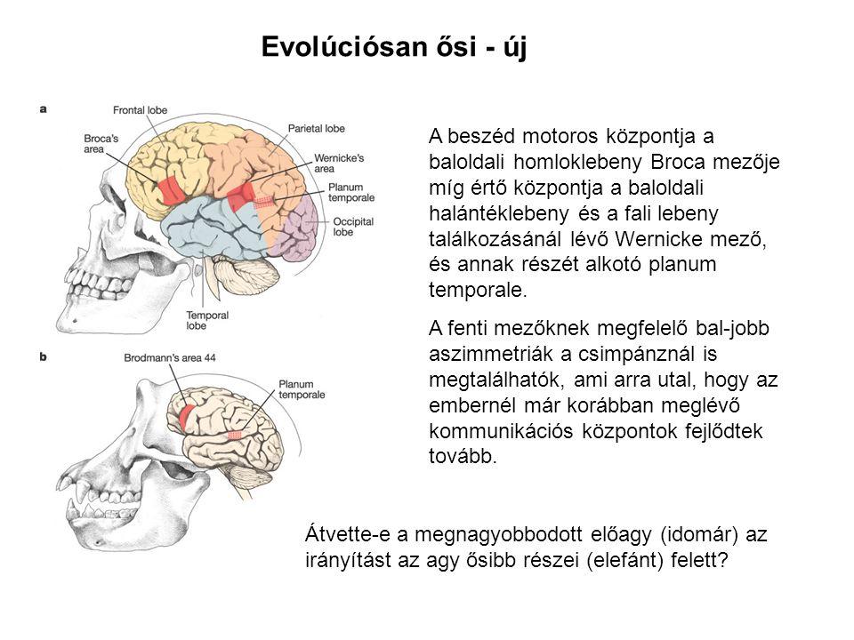 Evolúciósan ősi - új