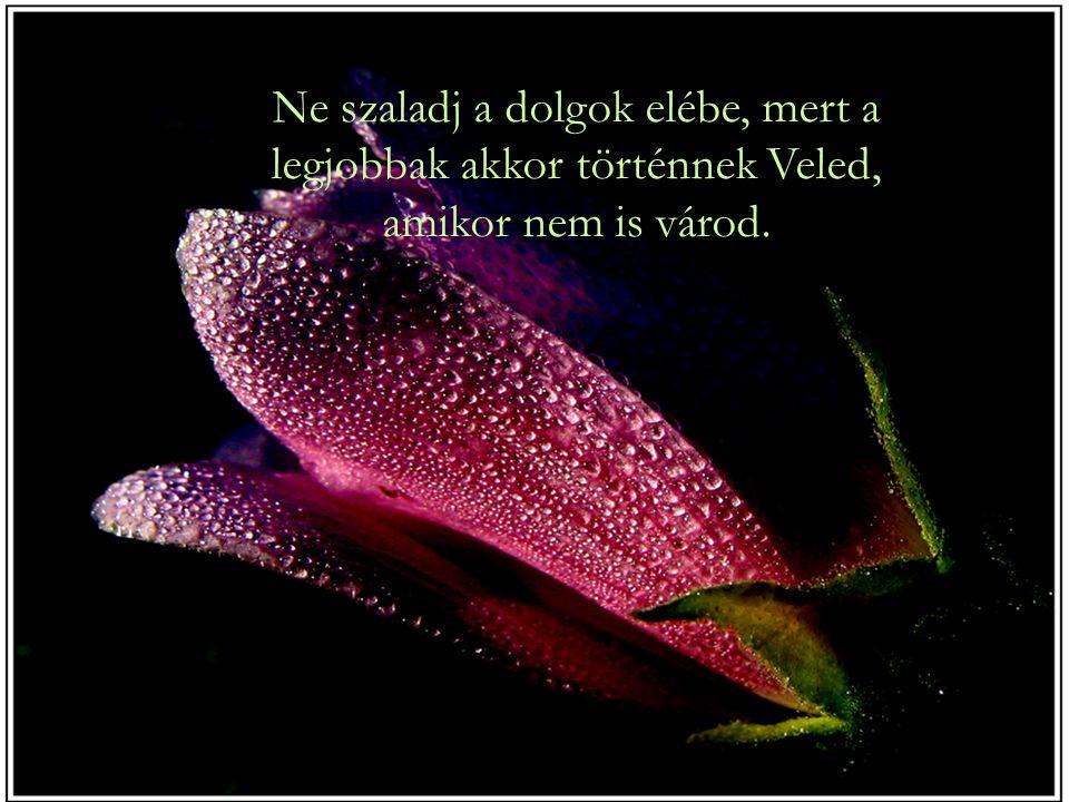 Ne szaladj a dolgok elébe, mert a legjobbak akkor történnek Veled, amikor nem is várod.