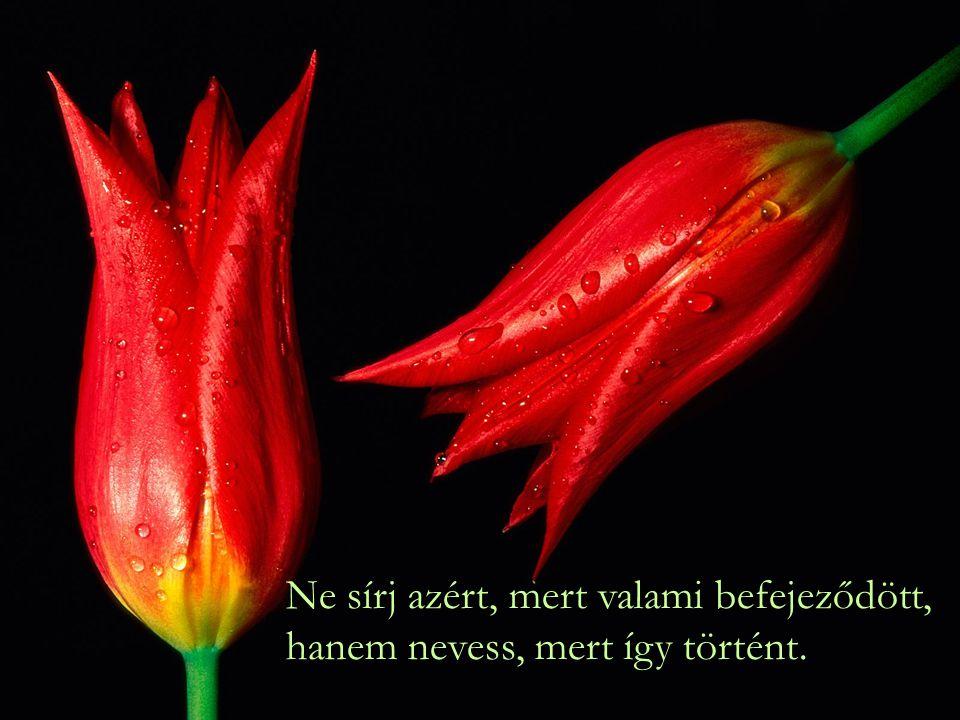 Ne sírj azért, mert valami befejeződött, hanem nevess, mert így történt.