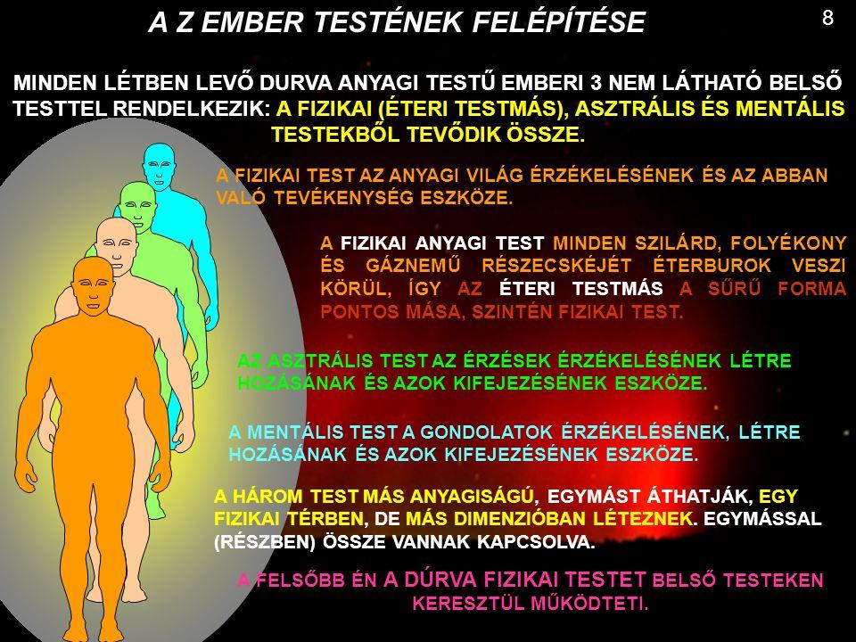 A Z EMBER TESTÉNEK FELÉPÍTÉSE