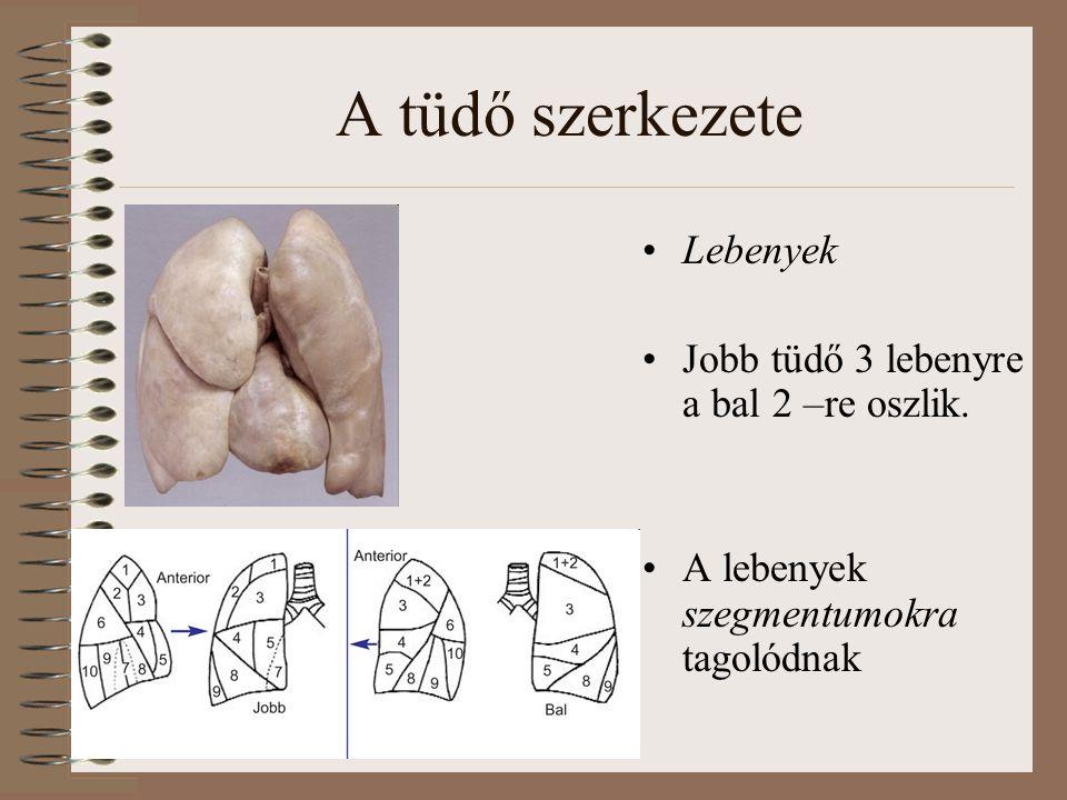 A tüdő szerkezete Lebenyek Jobb tüdő 3 lebenyre a bal 2 –re oszlik.