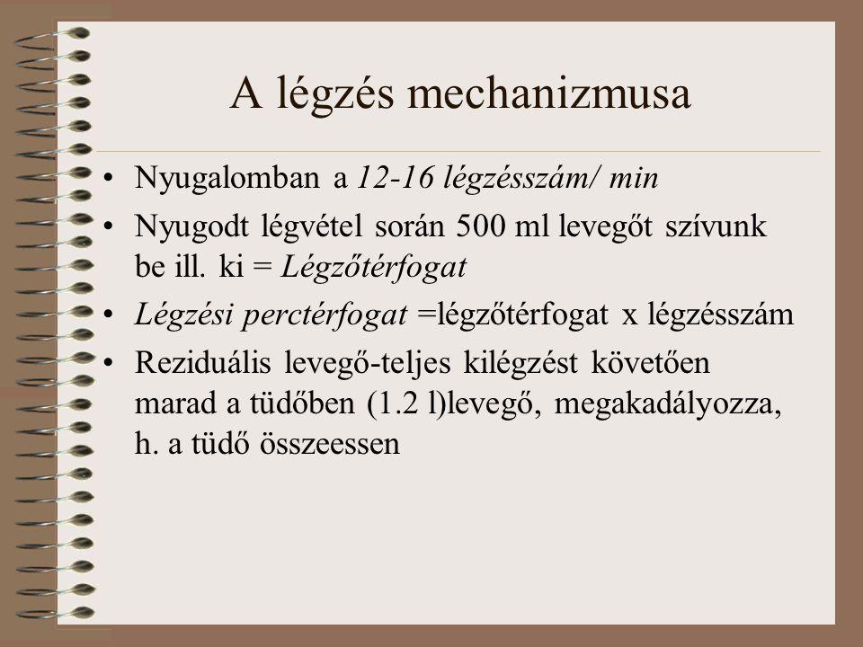 A légzés mechanizmusa Nyugalomban a 12-16 légzésszám/ min