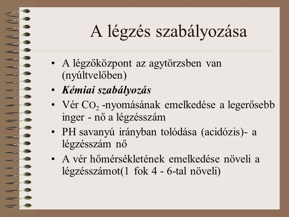 A légzés szabályozása A légzőközpont az agytörzsben van (nyúltvelőben)