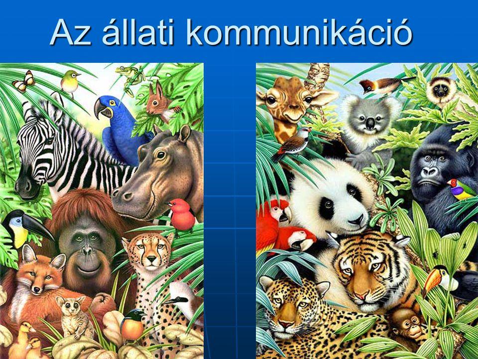 Az állati kommunikáció