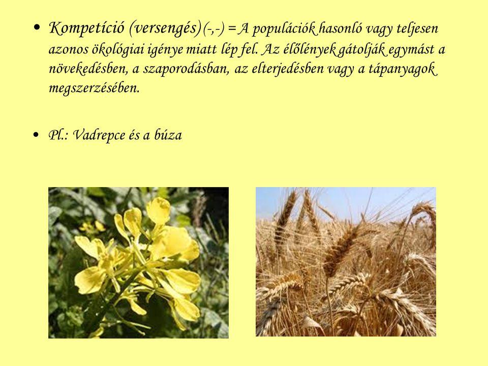 Kompetíció (versengés) (-,-) = A populációk hasonló vagy teljesen azonos ökológiai igénye miatt lép fel. Az élőlények gátolják egymást a növekedésben, a szaporodásban, az elterjedésben vagy a tápanyagok megszerzésében.